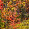 Fall Color in the Adirondacks