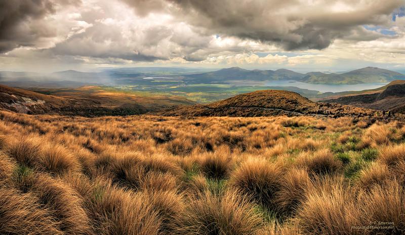Tongoriro NP (NZ) Hike Grasslands