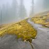Cloudy Mt. Rainier NP Scene