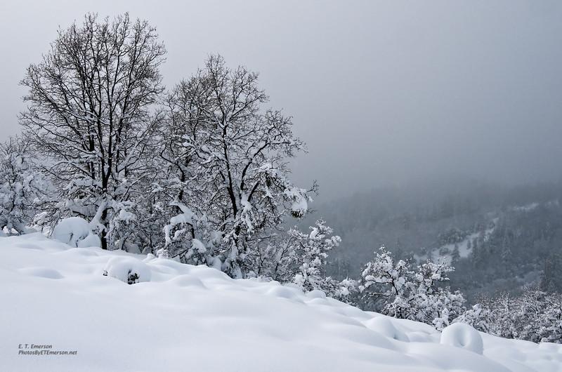 Snowy Winter Scene near Foresthill