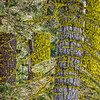 Mossy Tree Trunks at Donner Pass