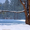 Snowy Winter Scene in Truckee