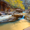 Glow on the Virgin River in Zion