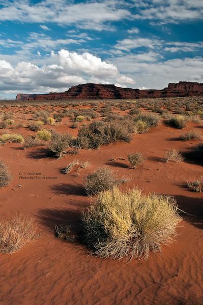 Desert View of the Canyonlands NP, UT