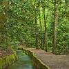 Mingus Mill Pathway