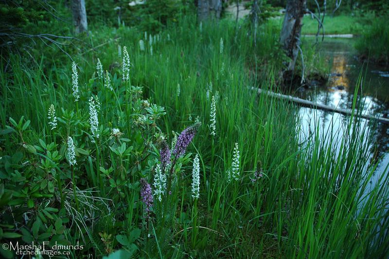 A Quied Little Bog-Elegantly Landscaped