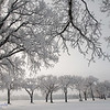 A Frosty Day in Lethbridge