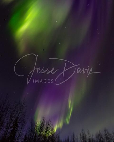 Aurora, NP/AK, 10-25-2016.