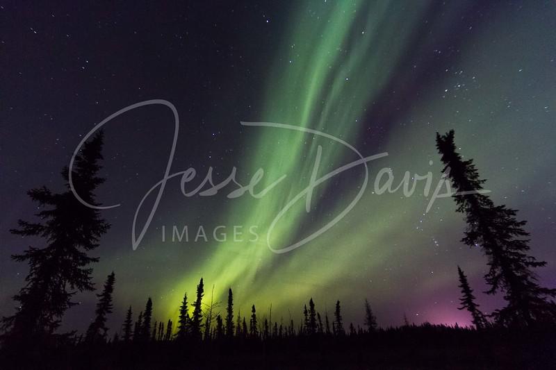 #Aurora Sentinels