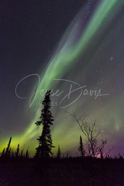 Nordale #Aurora