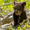3rd Lil Bear