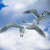 Seward Seagulls