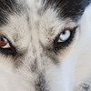 A Dog's Eyes Have the Power to Speak a Great Language