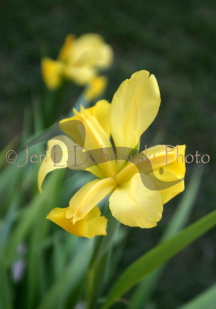 My Prairie Flower Garden