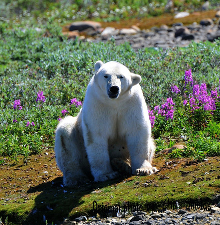 Summer in the Arctic