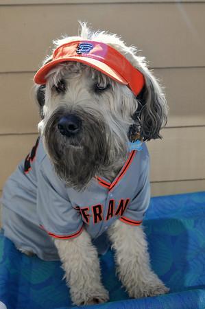 Murphy #1 Giants Fan