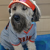 Murphy #1 Giants Fan
