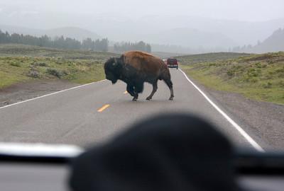 Traffic Jam in Yellowstone