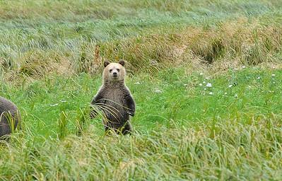 Grissly Bear Cub... very cute