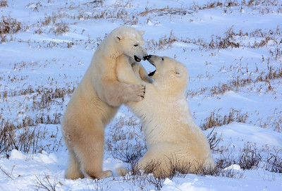 Youngsters playing on the Tundra