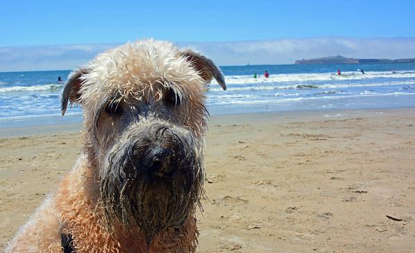 Fun Dog Day at the Beach