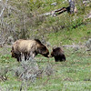 A special moment .....Grizzly Mom and one of her cubs.