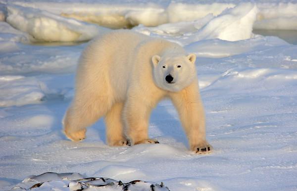 Walking the Tundra