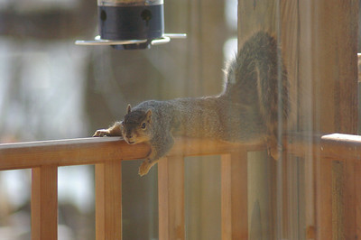 squirrel on deck1-1
