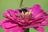Pollination, Summer 2009.
