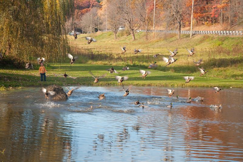 Adam scares the ducks away.