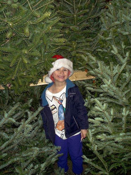 Picking a Christmas Tree, December 2009