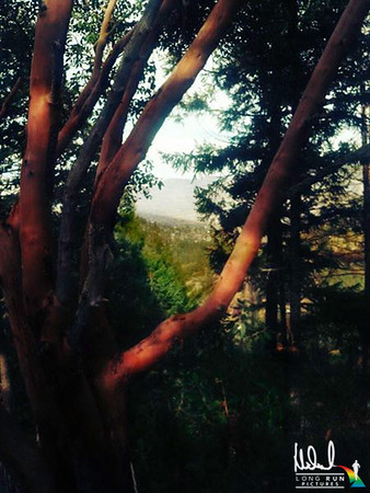 Selected Landscapes