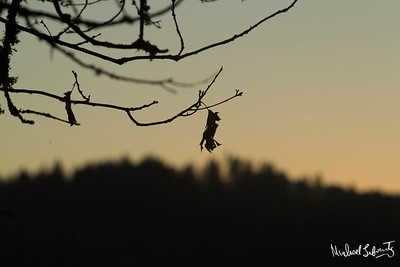 tree's last leaf at magic hour (1 of 1)