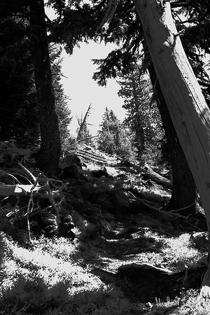 mountain trail-2012 (1 of 1)-2