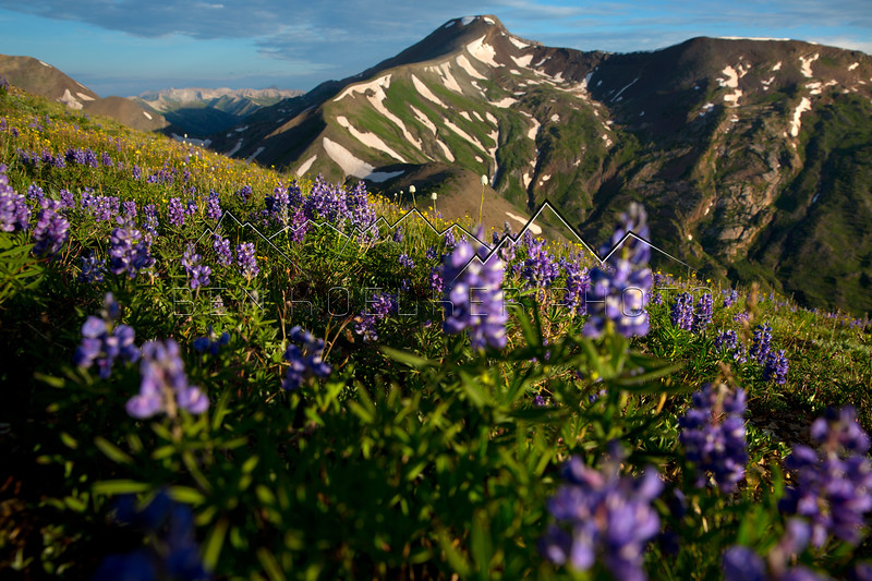 Wildflowers on Cinnamon Mountain outside of Crested Butte, CO