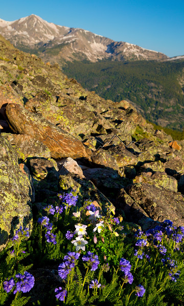 Flowers on Notch Mountain, CO