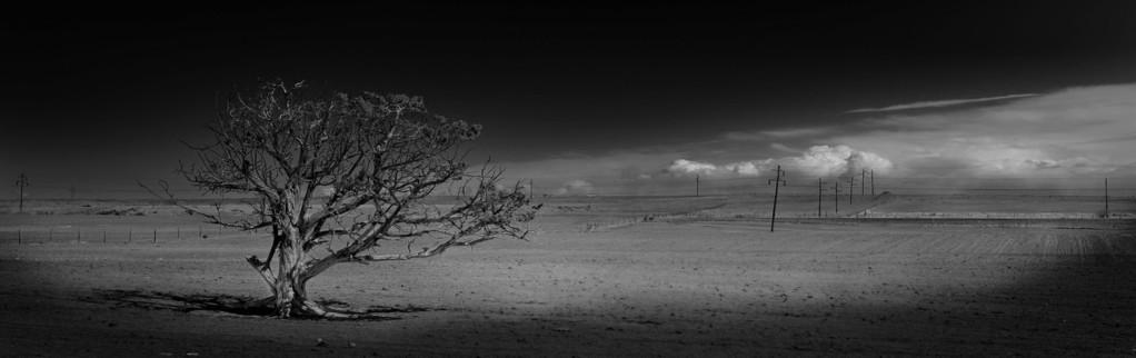 Lone tree in field southern Utah