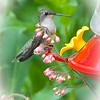 "06-02-2010<br /> <br /> ""Hummingbird"""