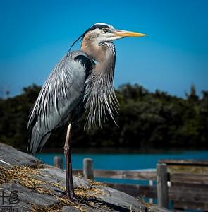 intense heron