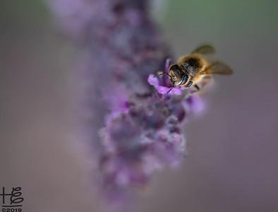 Etheric honey bee