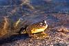 Frog smile. Wanda Lake.