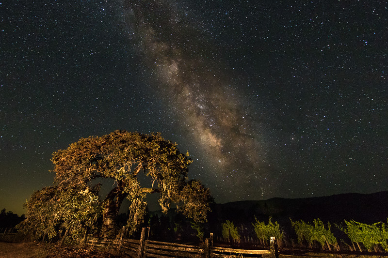 Wine Country Milky Way
