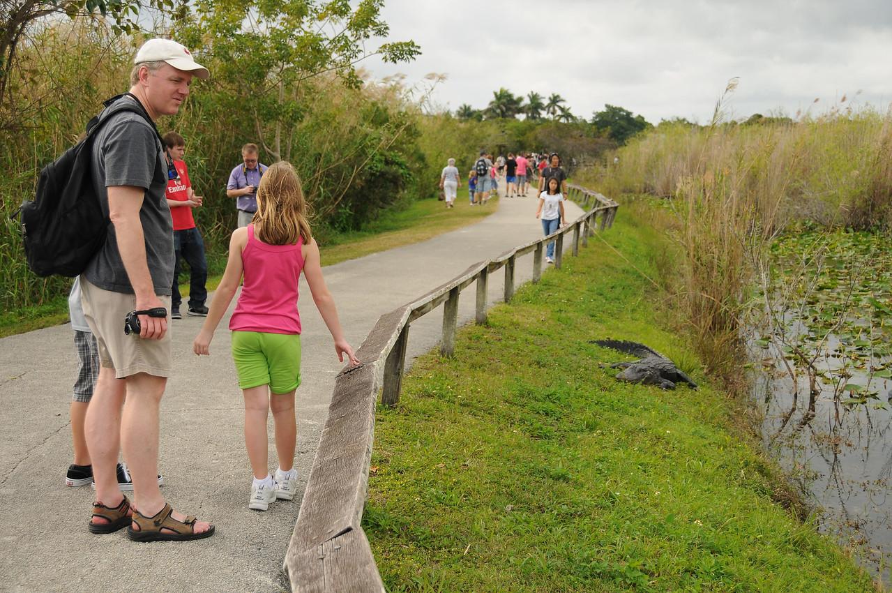 Careful where you walk!  Florida Everglades - December 2012
