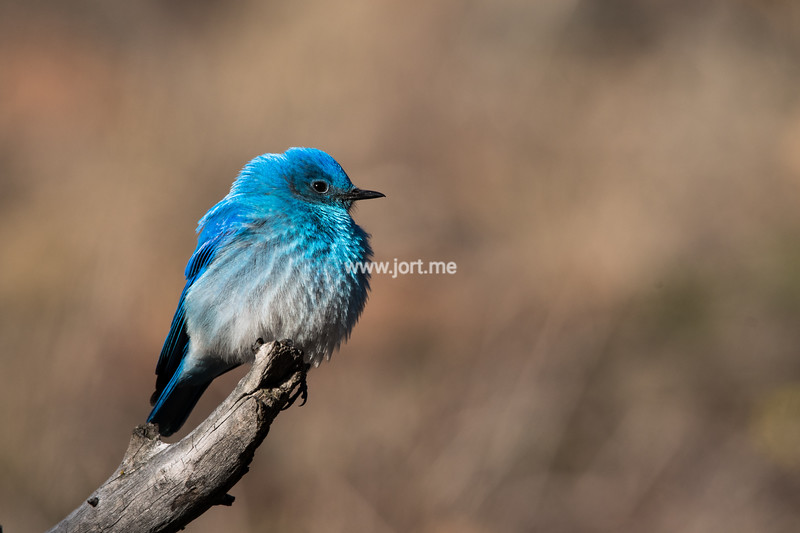 A bright blue bird