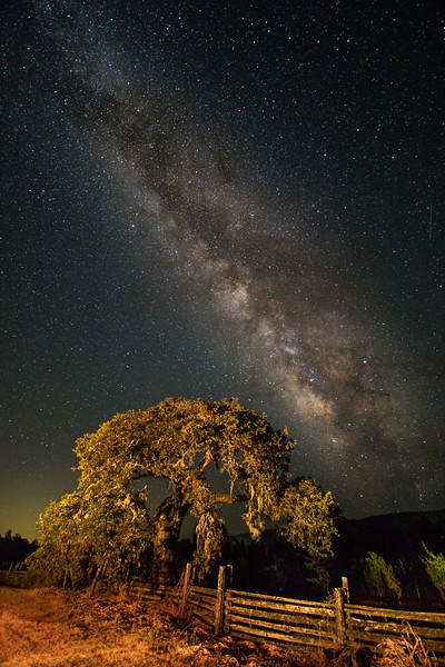 Milky Way and the Old Oak