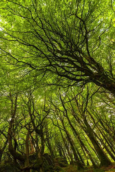 Magic Woods, Isle of Ulva, Inner Hebrides, Scotland