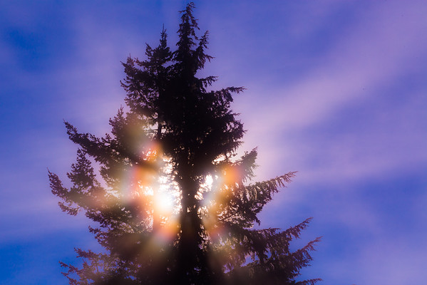 Sparkling Cedar, Revelstoke BC