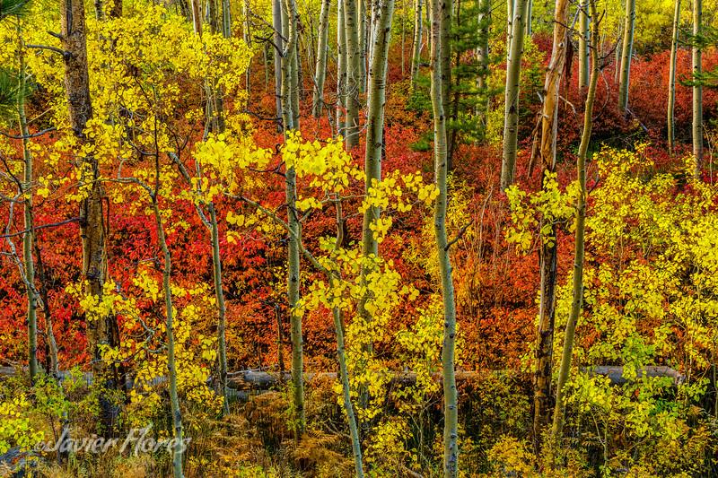 Fall at Lee Vining Canyon