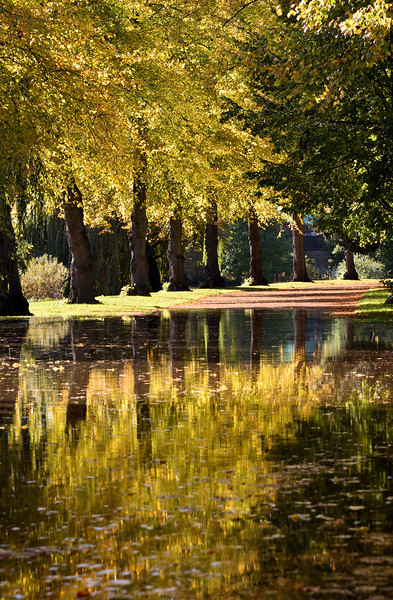 Autumn leaves and flooding in the quarry, Shrewsbury.