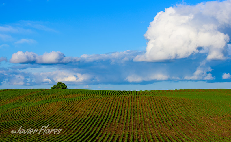 Yolo County Farmlands